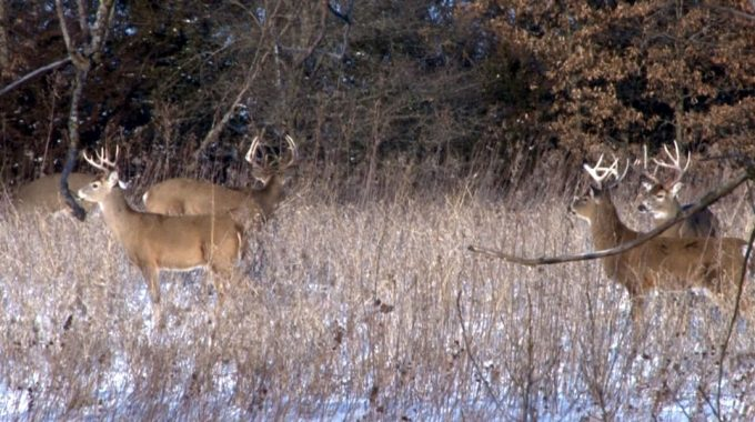 6 Ideas for buying Hunting Land on a Budget