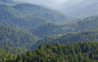 6 Ways You Can Help Protect Our Forests